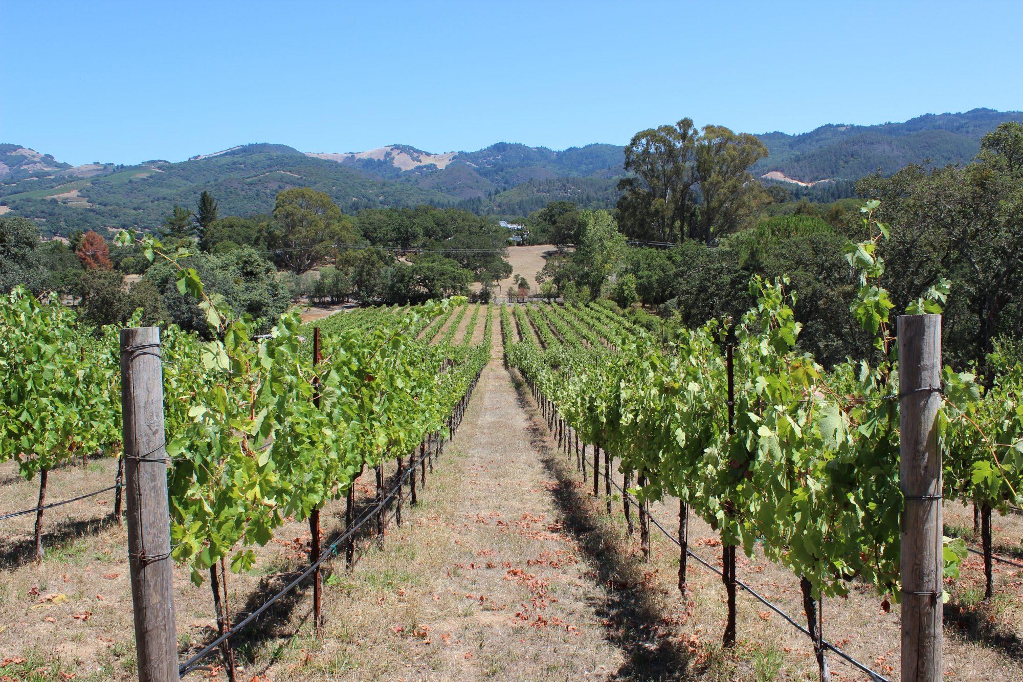 sonoma-wine-country-e1512420008552