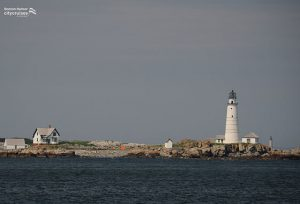 Whale Watch Boston Lighthouse