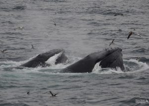 Whale Watch Double Lunge