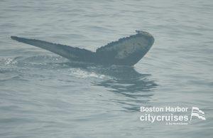 Whale Watch Touchdown Fluke