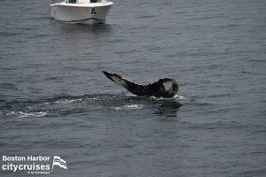 Whale Watch Nile Tail Fluke