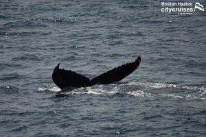 Whale Watch Tongs Fluke