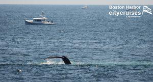 Whale Watch Dross Dive