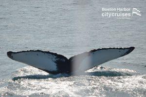 Whale Watch Freckles Fluke