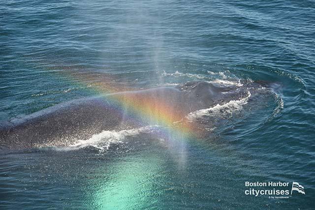 Whale Watch Nine Rainbow