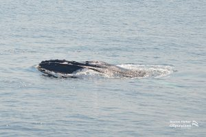 Whale Watch Dross at Surface