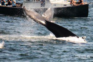 Whale Watch Chromosome Lobtail