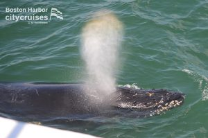 Whale Watch: Whale blowing air