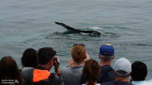 Whale Watch: People taking photos of a whale