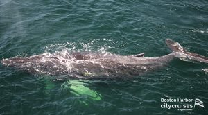 Whale Watch: Whale under the water