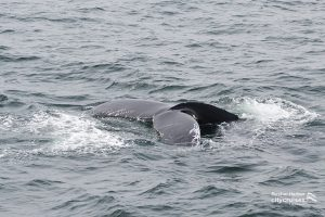 Whale Watch: Whale tail