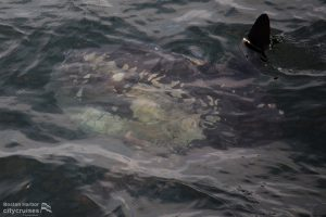 Whale Watch: Whale under water