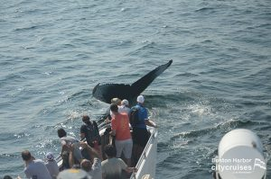 People taking pictures of whale tail close to boat.