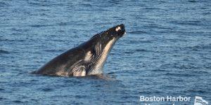 Whale breaching.