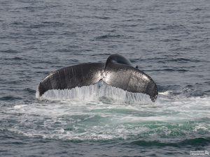Whale Watch: Samara Kick