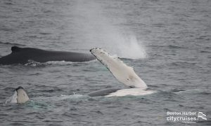 Whale Watch: Whale Fluke and second whale