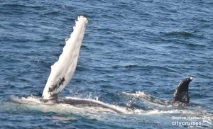 Whale Watch: Flippers
