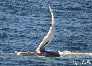 Whale Watch: Flipper