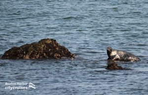 Whale Watch: Grey Seal
