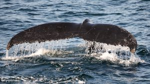 Whale Watch: Whale Bounce