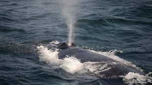 Whale Watch: Whale Blowhole