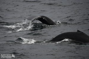 Whale Watch: Orbit and Calf Whales