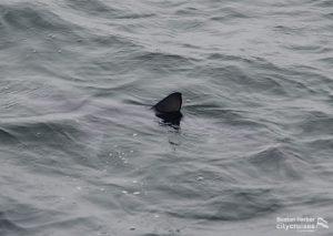 Wale Watch: Blue Shark