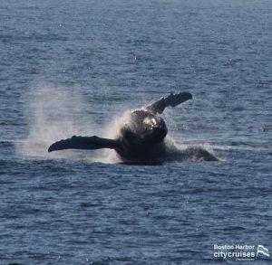 Whale Watch: Crown Breach