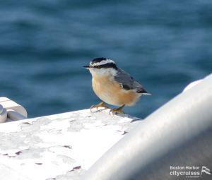 Bird on the boats deck.