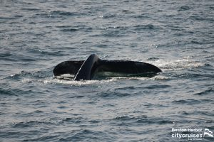 A whales tail as descending.