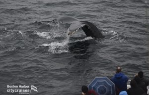 Whale Watch Flukes Up
