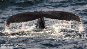 Whale Watch Dross