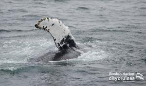 Whale Watch Tripod Flipper