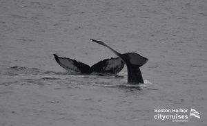 Whale Watch Salt and Scylla