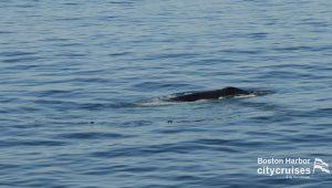Whale Watch Bubble Net