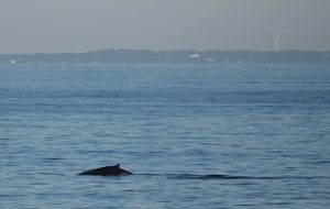 Whale Watch Gloucester