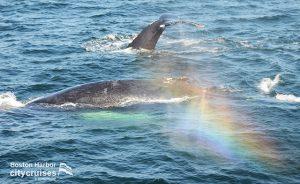 Whale Watch Rainbow Dive